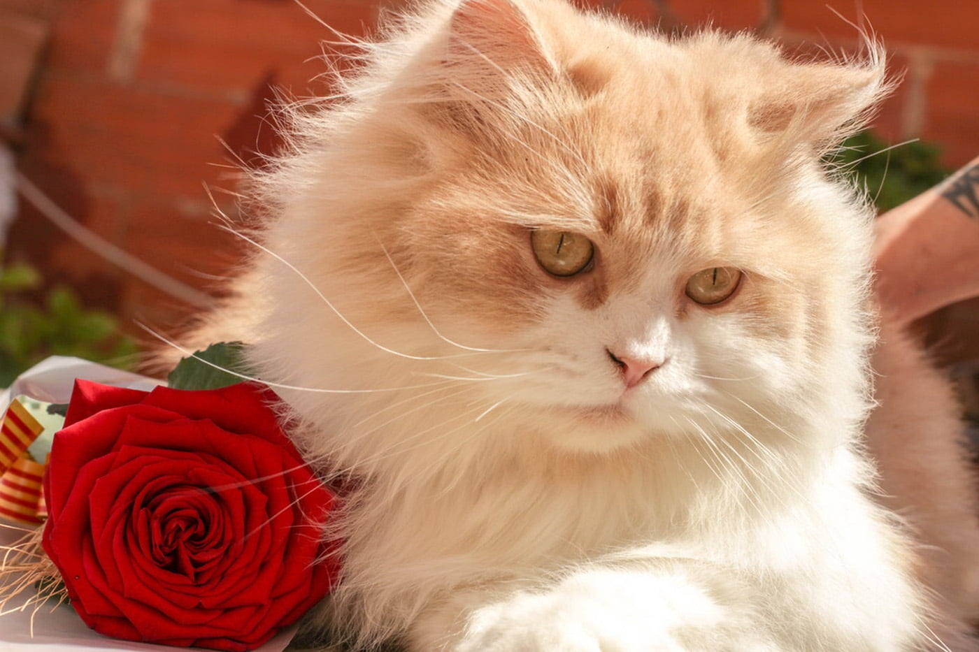 Public Service Announcement: 'Kitten Fur' Perfume is Here