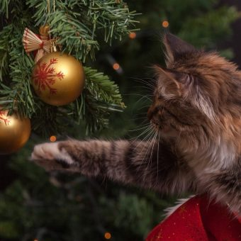 Some Of Our Favourite Christmas Traditions