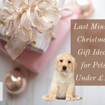 Last Minute Christmas Gift Ideas for Pets Under £10
