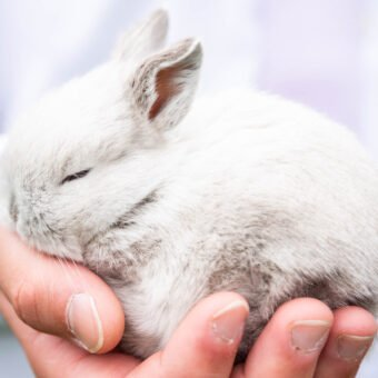 How to Care for A New Rabbit in Your Family's Life: Four Tips